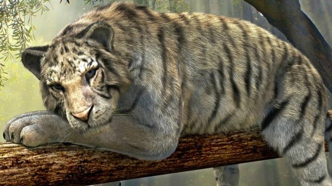 Entspannen im Regenwald