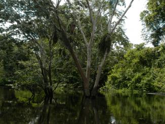 Artenreichtum hilft gegen Klimastress