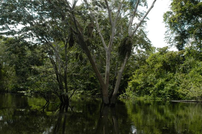 Überschwemmter Regenwald in Peru