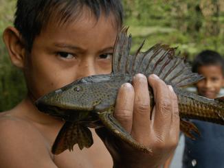 Welt der Fische Amazonas