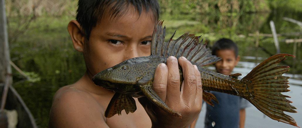 Die Vielfalt der Fische gibt Rätsel auf.