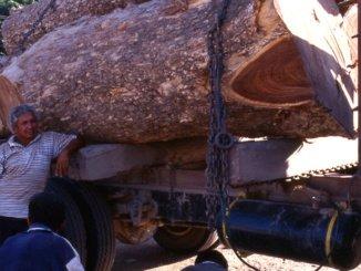 Lkw Transport von Tropenhölzern Amazonas