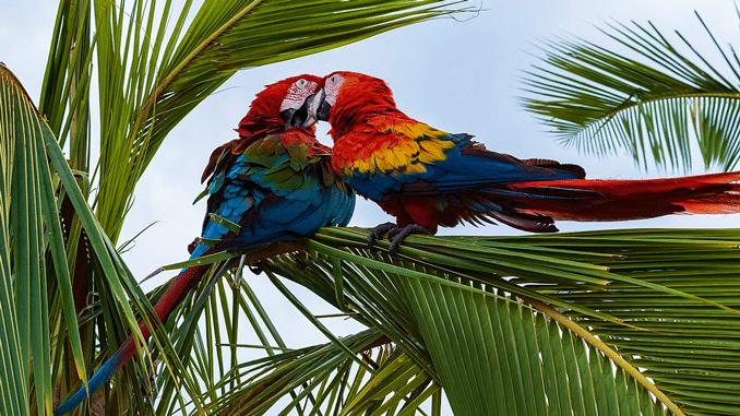 Papageien: Ratgeber in Sachen Liebe