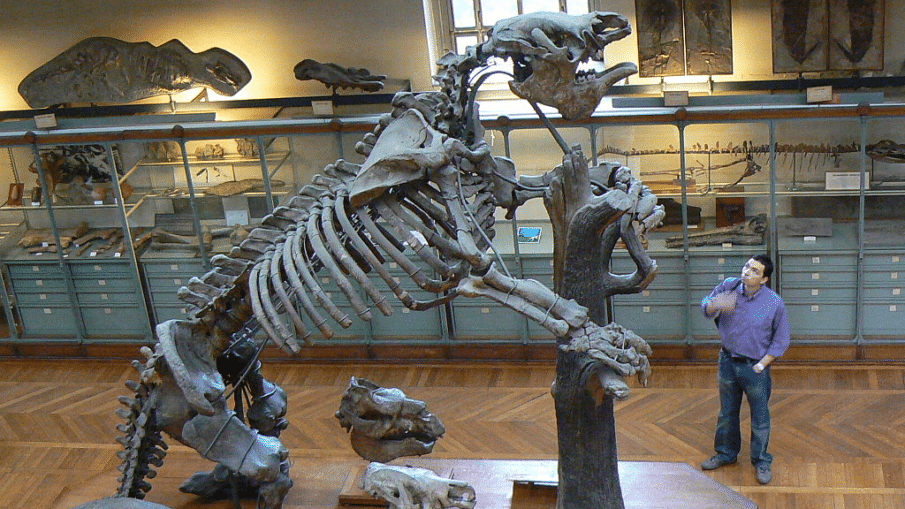 Riesenfaultier (Megatherium americanum complete)