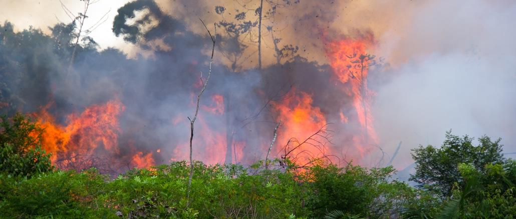 Der Regenwald wird weiter in Brand gesetzt.
