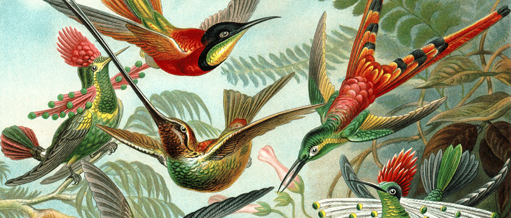 Kolibris sind die wahren Flugkünstler