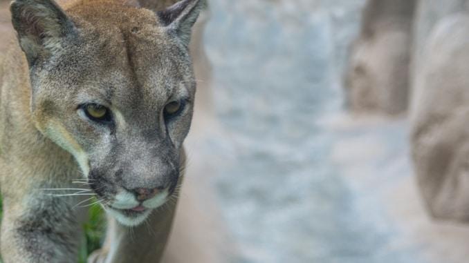 Puma Rekord im Hochsprung