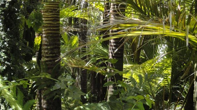 Rainforest Dschungel Regenwald