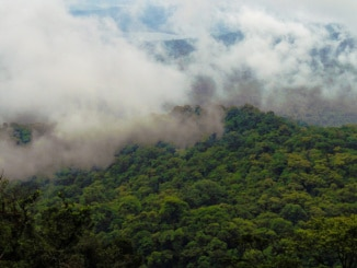 Wasserkreislauf im Amazonas