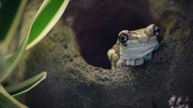 Amphibien Amazonas Regenwald