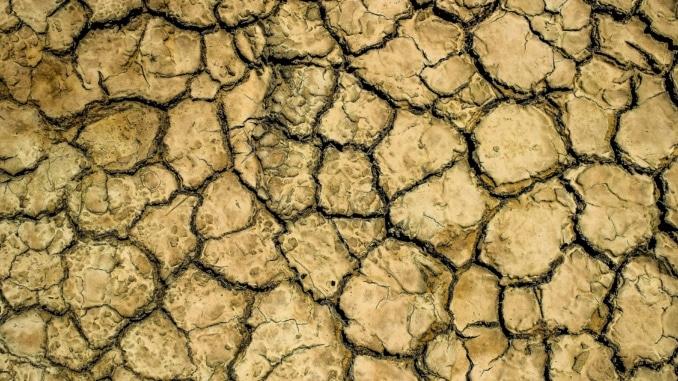 Dürreperioden nehmen zu. Der Wald braucht länger, um sich zu regenerieren
