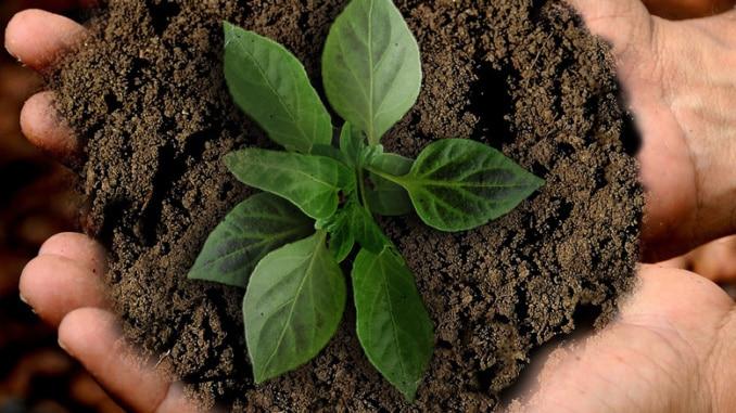 Nachhaltigkeit sustainability