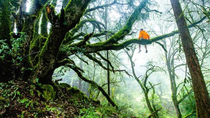 Erstaunliches Amazonas