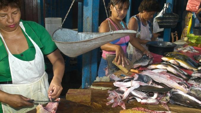 Fischmarkt Iquitos Fische