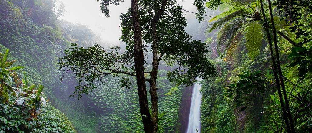 Naturwunder Regenwald