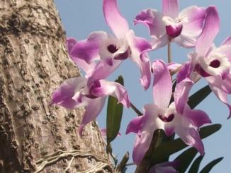 Orchideen wilde Schönheiten