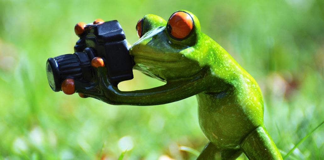 Fotograf Frosch