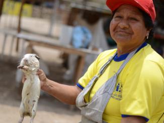 Meerschweinchen Peru